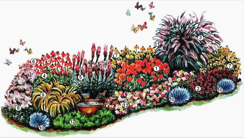 Virágok, amelyek vonzzák az uralkodó pillangókat